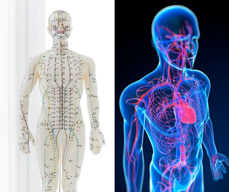 Acupuncture and immune system